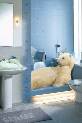 Relaxing Polar Bear iPhone Wallpaper
