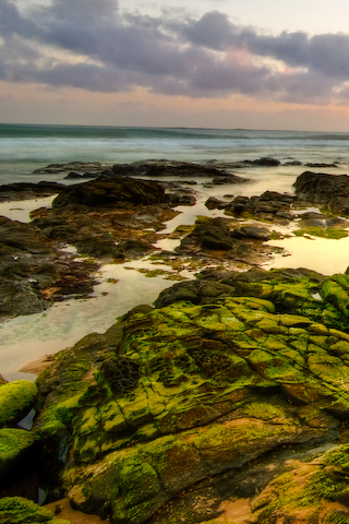 Algae Rocks iPhone Wallpaper