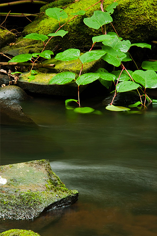 Calm Stream iPhone Wallpaper