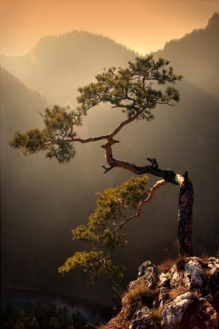 Mountainside Tree iPhone Wallpaper