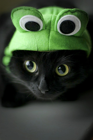 Frog Kitty iPhone Wallpaper