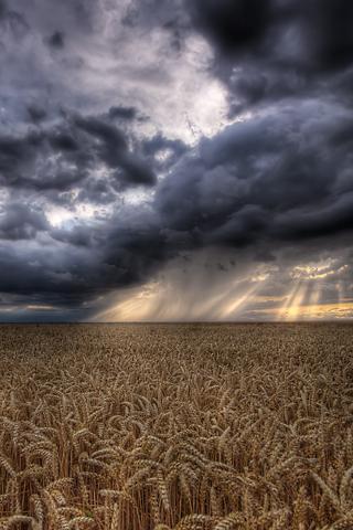 Stormy Field iPhone Wallpaper
