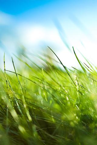 Blades of Grass iPhone Wallpaper
