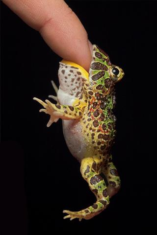 Pacman Frog iPhone Wallpaper