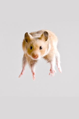 Hamster Jump iPhone Wallpaper