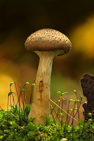 mushroom wallpaper phone - photo #17