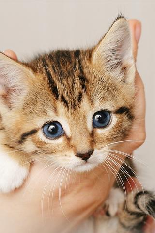 Little Kitten iPhone Wallpaper