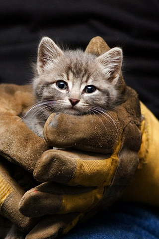 Kitten Rescue iPhone Wallpaper