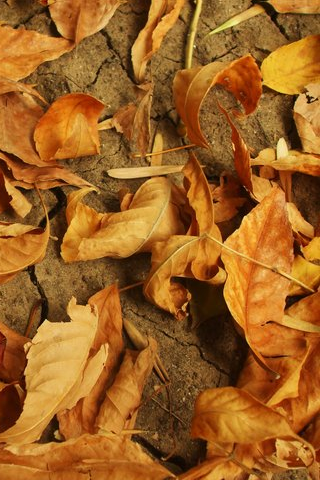 Leaves iPhone Wallpaper