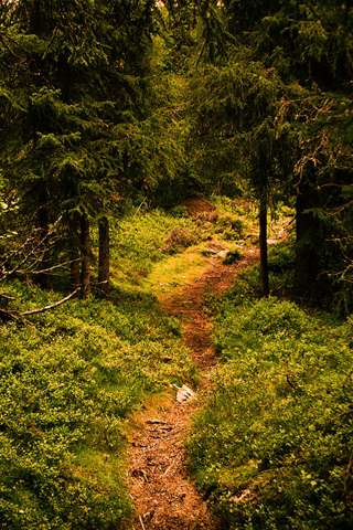 Forest Path iPhone Wallpaper