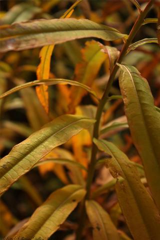Gree Plant iPhone Wallpaper