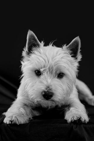 Happy Puppy iPhone Wallpaper
