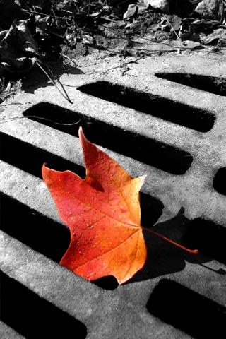 Falling Leaf iPhone Wallpaper