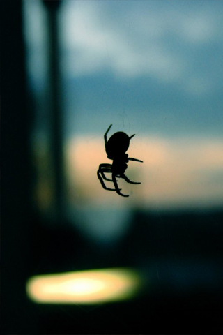 Spider Silhouette iPhone Wallpaper