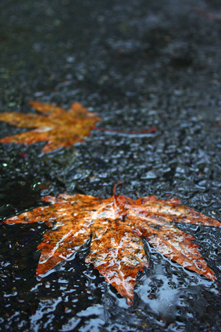 Wet Leaves iPhone Wallpaper