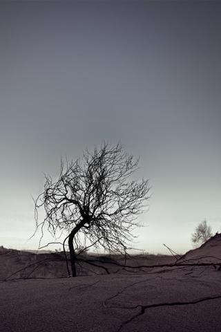 Desert Landscape iPhone Wallpaper
