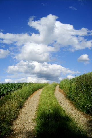 Grassy Path iPhone Wallpaper