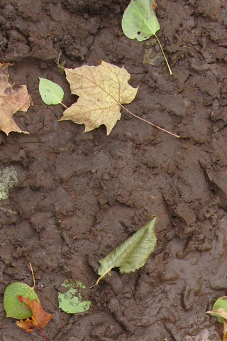 Mud + Leaves iPhone Wallpaper