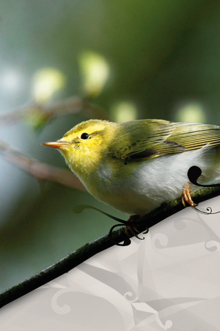 Yellow Bird iPhone Wallpaper