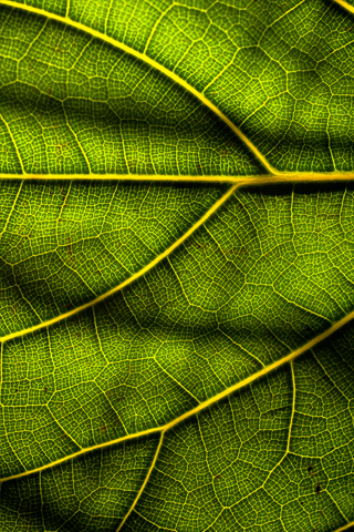 Leaf Texture iPhone Wallpaper