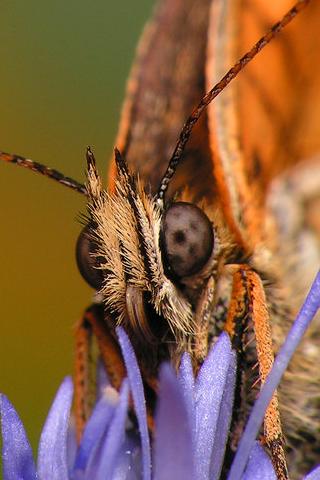 Moth Closeup iPhone Wallpaper