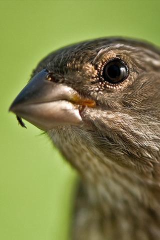 Bird Closeup iPhone Wallpaper