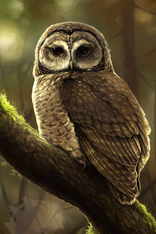Owl Painting iPhone Wallpaper
