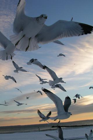 Seagulls iPhone Wallpaper