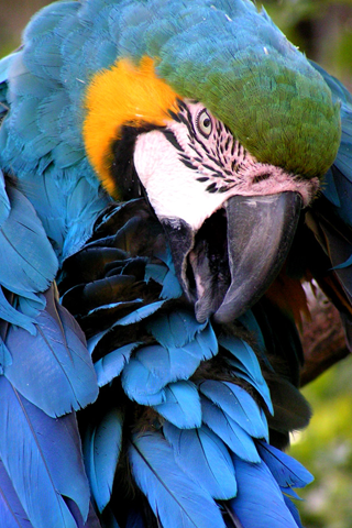 Colorful Parrot iPhone Wallpaper