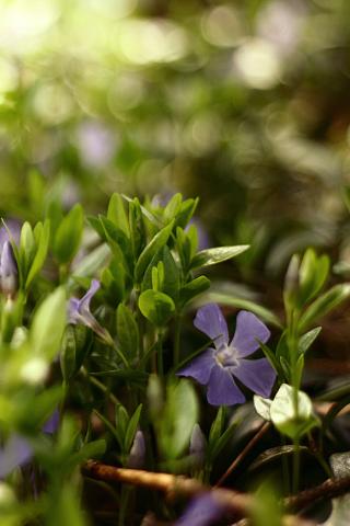 Purple Flowers iPhone Wallpaper