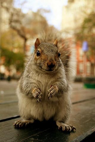 Squirrel iPhone Wallpaper